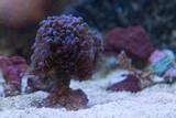 saltwater fish  aquarium coral