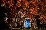 blue door and tree in autumn - 233731568