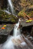 Der Schwarzwald und seine Natur