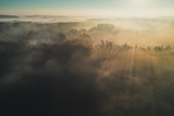 Spectacular view from drone on sunbeam between trees in misty morning.