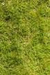 Quadro Detailed closeup of green grass