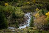 Weisse Lütschine mit Wald im Lauterbrunnental - 233742912