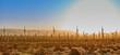 Sunrise Windmill Farm