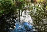 Reflejos en lago. - 233765975