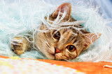 cat on a fluffy blanket - 233802748