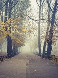 Autumn foggy tree alley in the Planty park on a misty day in Krakow, Poland - 233819512