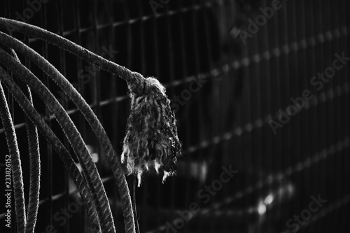 Black and white western rope frayed closeup. © ccestep8