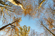 sunrise in the forest with view of treetop and blue sky