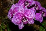 Orchid Escape © Dennis