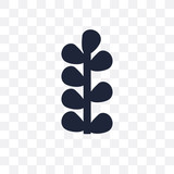 Botanical transparent icon. Botanical symbol design from Museum collection. - 233846709