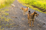 Group of dogs at the countryside