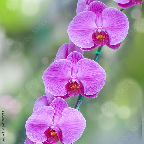 Zakończenie Piękni Storczykowi kwiaty w ogródzie