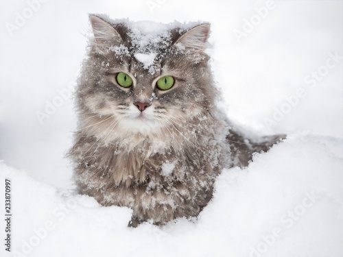 Kitty in snow - 233870997