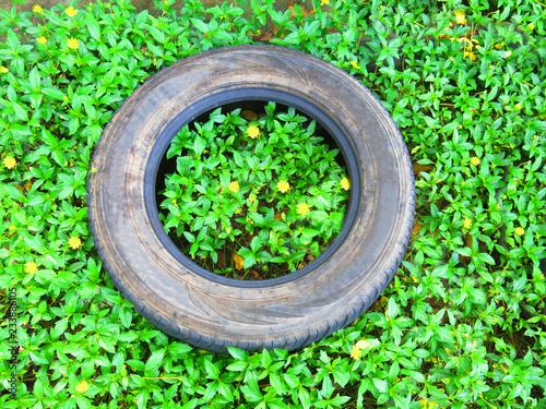 Old rubber tire in garden. - 233886105