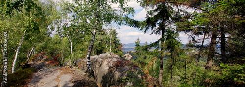 Dzika natura w parku w Broumowskich Ścianach, w Czechach w okolicy Broumov - 233886584