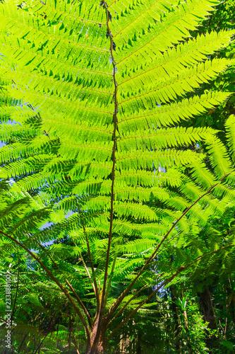 Tropical jungle leaf close up background