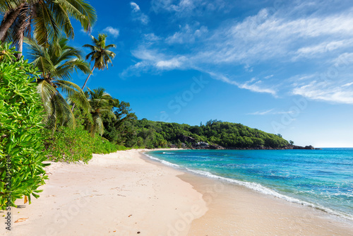 Untouched beach with palm and turquoise sea