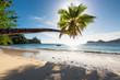 Palm Tree at sunset on summer vacation ocean beach.