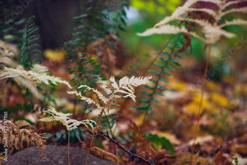 White fern on a forest floor in Autumn