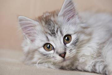 Portrait of playful cat