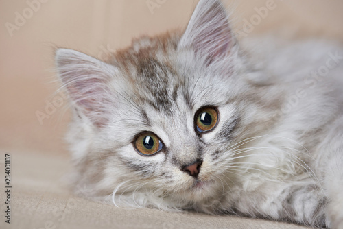 Portrait of playful cat - 234001137