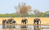 Family herd of elephants walking past a waterhole with a nie reflection in the water against a pale blue sky and bush background. Hwange Natioanl Park, Zimbabwe