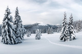 Fantastic winter landscape with snowy trees. Carpathian mountains, Ukraine, Europe. Christmas holiday concept - 234043120