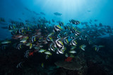 Schools of fish sheltering from the swell