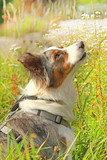 cute dog sitting in the grass profile © absolutimages