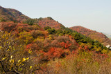 Fall season of yellow high land of China, colorful forest - 234079108