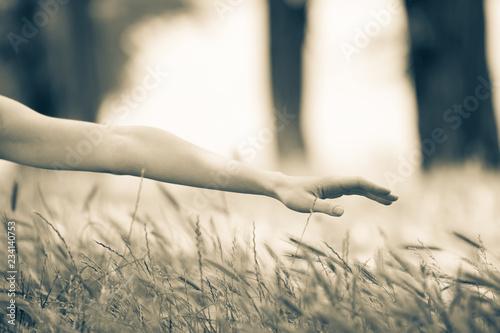 Leinwandbild Motiv Female holding a hand over grass spikes at countryside