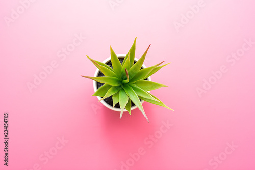 Artificial green flower with leaves in a pot on pink background