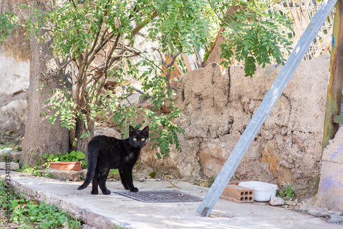 A black stray cat with yellow eyes looks at the camera, while standing on the sidewalk in the Anafiotika neighborhood of Athens, Greece, where stray cats are common.