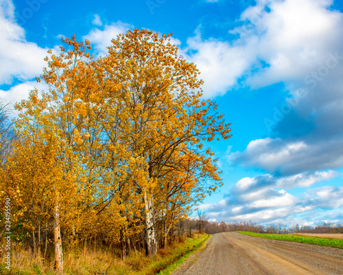 fototapeta na ścianę country road and sky in autumn