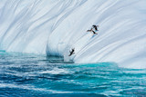 Group of penguins running and jumping from the iceberg in Antarctica - 234218534