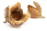 European beech (Fagus sylvatica) masts with seed macro - 234231737