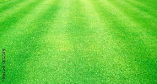Natural background of green grass - 234243991