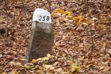 Fototapeta Rocks - kamienny słupek graniczny w lesie bukowym © qrrr