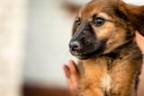 Little cute light brown homeless puppy