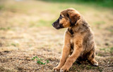 Little cute light brown homeless puppy obediently waiting
