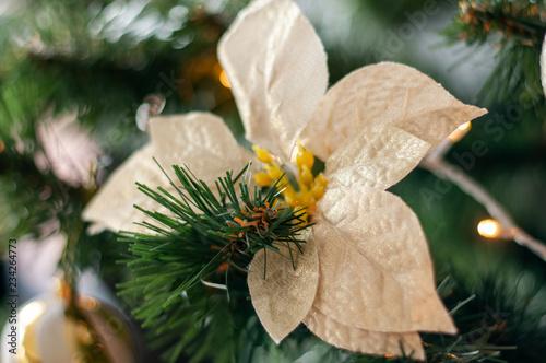 fototapeta na ścianę Christmas white flower with yellow pistil