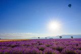 Sunrise over blooming lavender field at Provence France