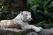 Zoo Singapore