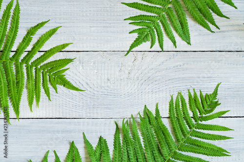 Background of green fern leaves on a white wooden surface
