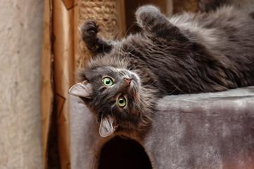 Portrait of cat © Dmitry