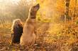 Leinwandbild Motiv Beste Freunde Kind und Hund sitzen glücklich im leuchtenden Herbstwald und schauen fallenden Herbstblättern nach