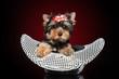 Yorkshire terrier puppy in hat
