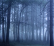 Dark foggy woods - 234376310