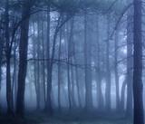 Dark foggy woods © Zacarias da Mata