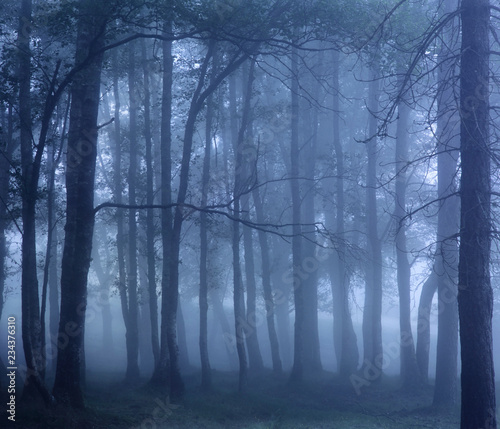 Dark foggy woods